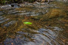 Green leaf floating on the river stock images
