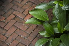 Green leaf and floor brick Stock Photography