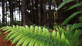 Green leaf with forest in the background royalty free stock photos