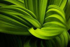 Green leaf in the forest close up of nature Royalty Free Stock Photo