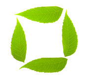 Green leaf frame Royalty Free Stock Image