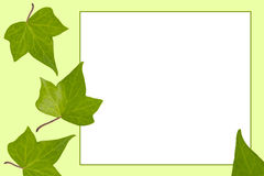 Green leaf frame Stock Photos