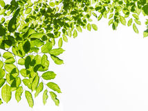 Green leaf frame Royalty Free Stock Photos