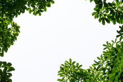 Green leaf frame with isolated copy space Stock Images