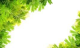 Green leaf frame Stock Photo
