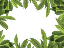 Green leaf for frame. White background Royalty Free Stock Photography