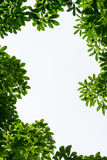 Green leaf frame with white isolated copy space Stock Photo