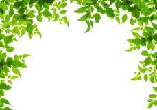 Green leaf fream Stock Image
