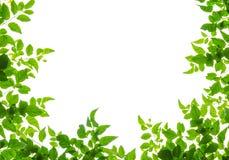 Green leaf fream Stock Photos