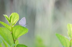 Green leaf fresh spring morning on nature and fluttering butterfly on soft green background stock image