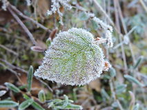 Green leaf in frost Stock Photos