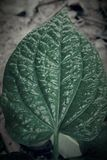 Green leaf. In the garden Royalty Free Stock Images