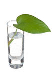 Green leaf in a glass of water Stock Images