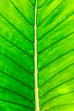 Green leaf on a gleam. Closeup royalty free stock image