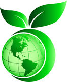 Green leaf globe Stock Images