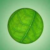Green leaf globe Stock Photo