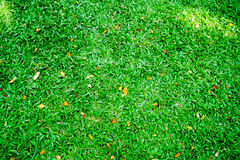 Green Leaf Grass in the Garden. Small Green Leaf Grass in the Garden Royalty Free Stock Images