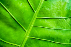 Green Leaf Grass in the Garden. Small Green Leaf Grass in the Garden Royalty Free Stock Image