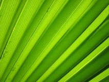 Green, Leaf, Grass, Line Royalty Free Stock Image