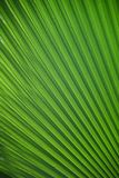 Green, Leaf, Grass, Plant Stock Photography