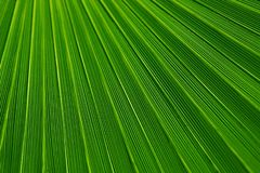 Green, Leaf, Grass, Plant Royalty Free Stock Photos
