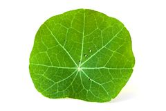 Green leaf. Green leaf with water drop on white background. Shallow depth of field Royalty Free Stock Image