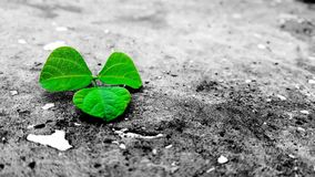 Green Leaf On Grey Ground Royalty Free Stock Photo