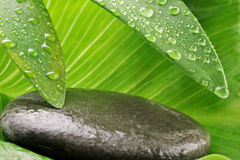Green leaf and grey stone Royalty Free Stock Photo