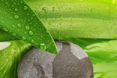 Green leaf and grey stone Stock Images