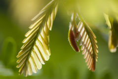 Green leaf growing Stock Images