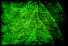 Green leaf grunge Stock Photography
