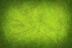 Green Leaf Grunge Nature Background Royalty Free Stock Photography