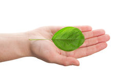 Green leaf in hand Stock Photography