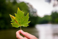Green leaf in hand Royalty Free Stock Photo