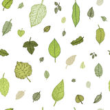 Green leaf. Vector seamless pattern. Stock Photos