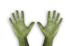 Green leaf hands Stock Images