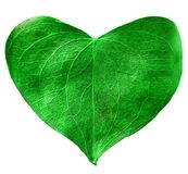 Green leaf heart shaped. Valentine`s Day concept. Protection of environment concept Stock Images