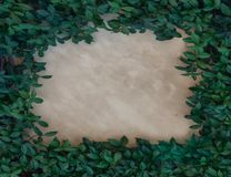 Green leaf hedge border on plaster wall. Green leaf hedge border on a weathered beige plaster wall with copy spacen stock image