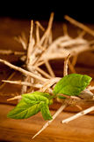Green leaf of Hope. Easter image with Crown of thorns and green leaf of hope stock images