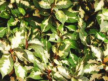 Green leaf house plant natural background Royalty Free Stock Photo
