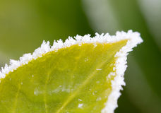 Green leaf with ice. Selective focus on some crystals Royalty Free Stock Photo