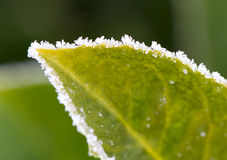 Green leaf with ice. Selective focus on some crystals Royalty Free Stock Photos