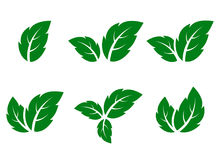 Green leaf icons set. Abstract green leaf icons set on white background Stock Images