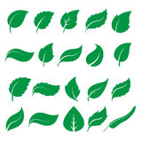 Green leaf icons. Set of green leaf icons  on white background. Leaves icon vector. illustration Royalty Free Stock Images