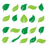 Green leaf icons. Set of green leaf icons  on white background. Leaves icon vector. illustration Stock Photos