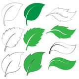 Green leaf icons. Set of green leaf icons  on white background. Leaves icon vector. illustration Royalty Free Stock Photos