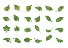 Green leaf icons set. Vector illustration Royalty Free Stock Images