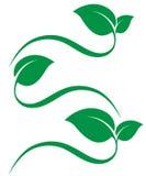Green leaf logo. Green leaf icons  on white background. Leaves logo vector illustration Stock Image