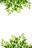 Green leaf isolate Royalty Free Stock Photos