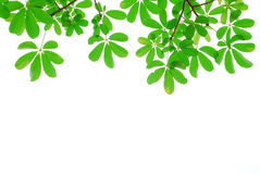 Green leaf isolated in nature. For background and texture royalty free stock image